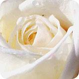 grenka-sol-vrtnice
